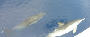 1915 BST and more Dolphins